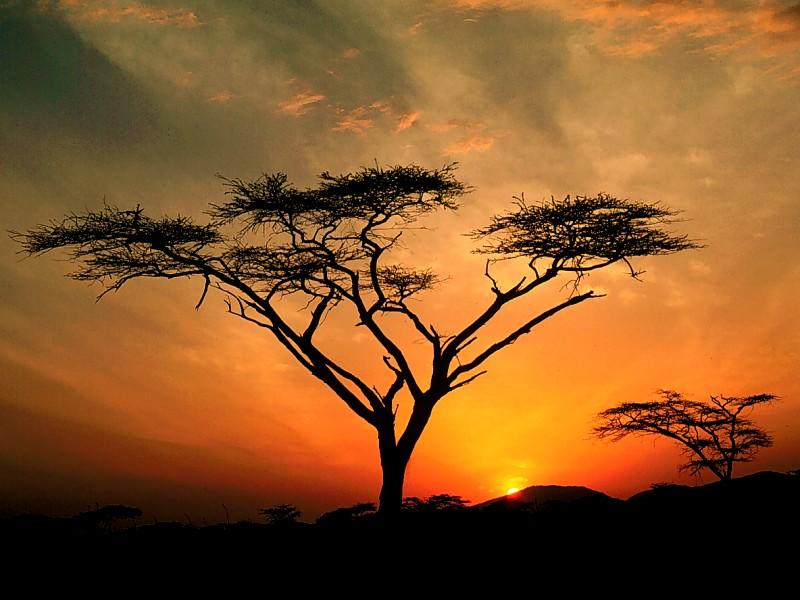 African Africa Sunset