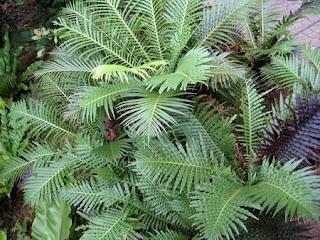 Plantas para Ambientes Calidos, Temperaturas Entre 18 y 24°C
