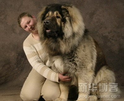 YOu see? The dog itself is chubbier than its master.