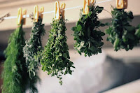 Заготовка лекарственных трав