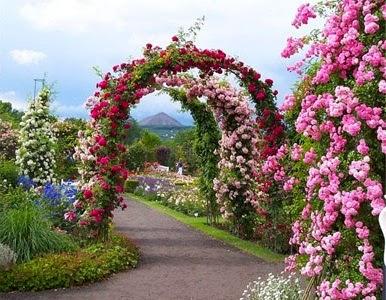 حديقة الزهور في بانكوك
