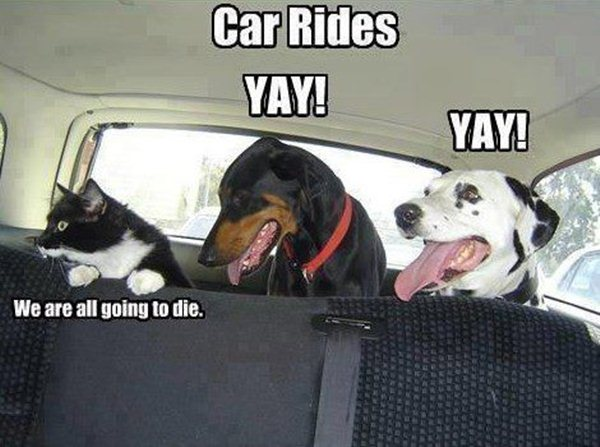 animal pictures with captions, car rides
