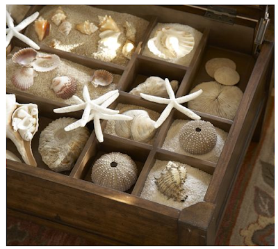coffee table to displaying shells