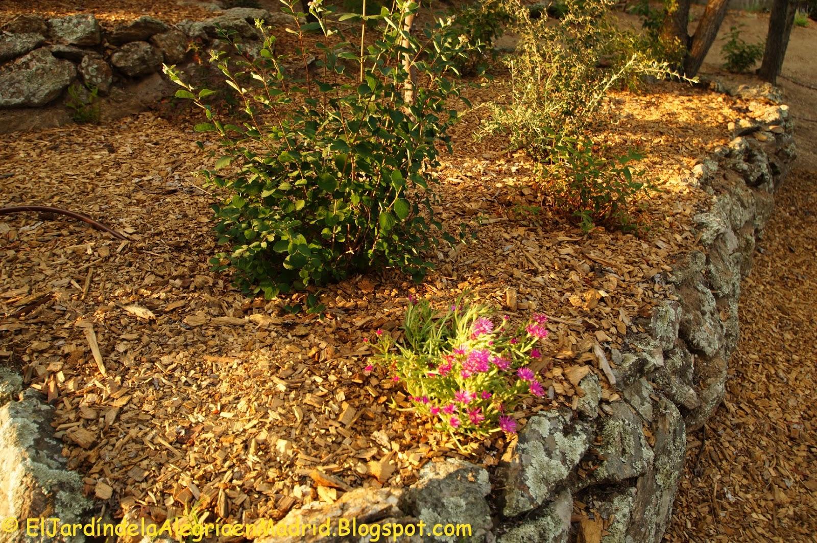 El jard n de la alegr a un corto paseo por el jard n for El jardin de la alegria cordoba