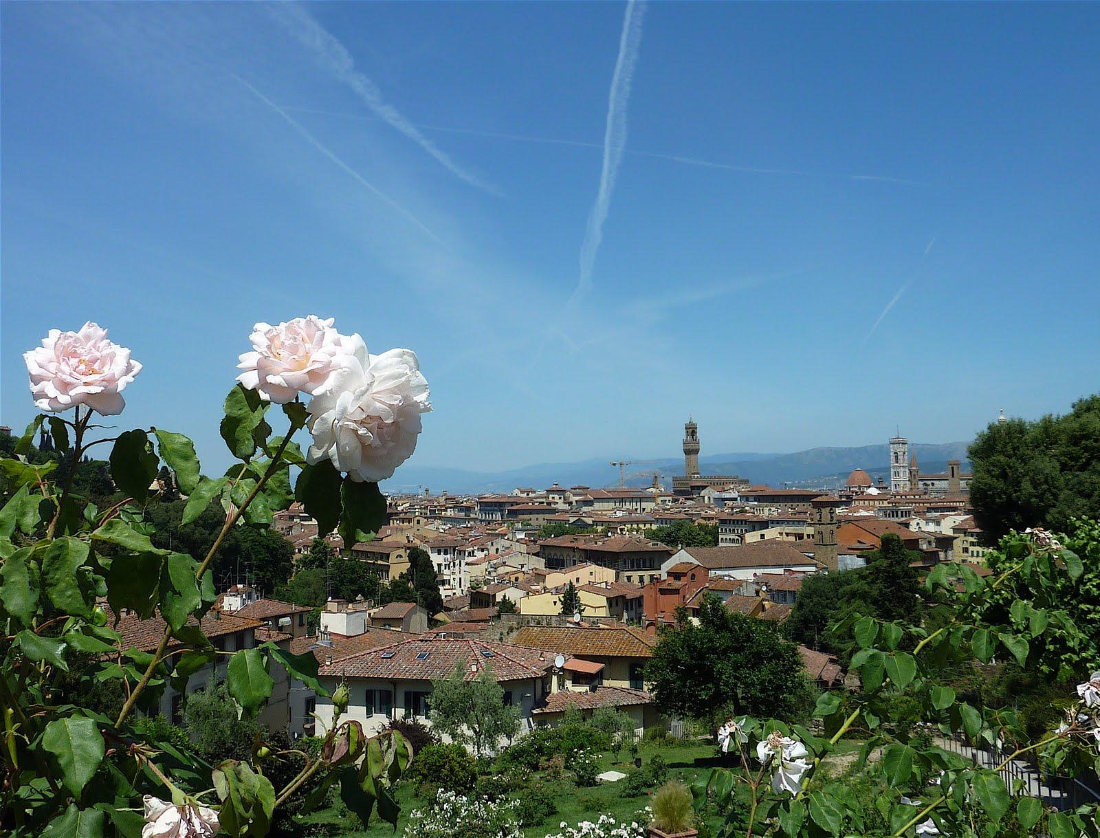 Chi non ha radici non e 39 albero firenze giardino delle rose - Giardino delle rose firenze ...