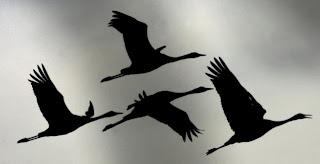 la migración de aves por el Estrecho