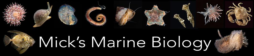 Mick's marine biology
