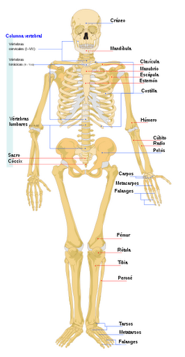 Esqueleto-puzzle (Juego)