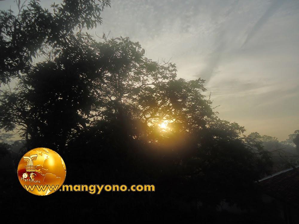 FOTO : Matahari pagi muncul diantara dedaunan pohon dan menembus celah - celah pohon untuk menyinari kampung Gardu.