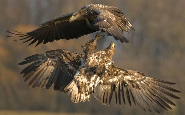 Imagens de animais mais incríveis já vistas