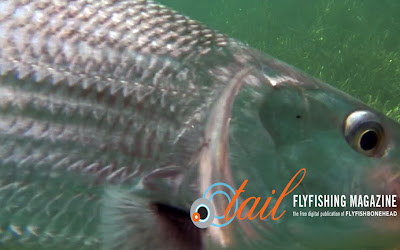 bonefishing - bonefish on the fly - bonefish flies  by flyfishbonehead and Tail Fly Fishing Magazine