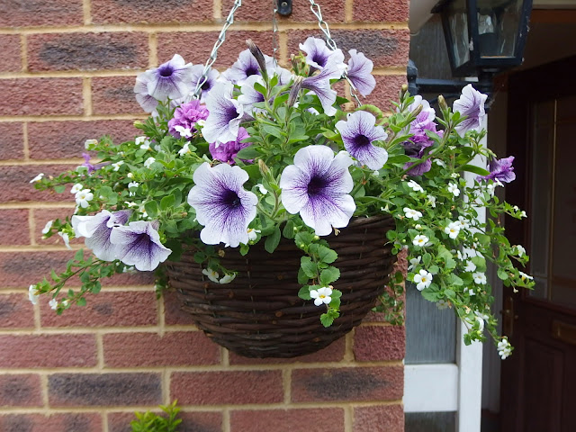 Picture of last year's hanging basket outside our front door