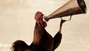Alasan Ayam Jantan Selalu Berkokok Saat Pagi Datang dari daniel maulana