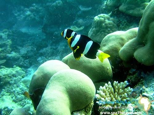 متعة الغوص في جزر المالديف