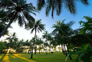 kebun kelapa pantai sire lombok