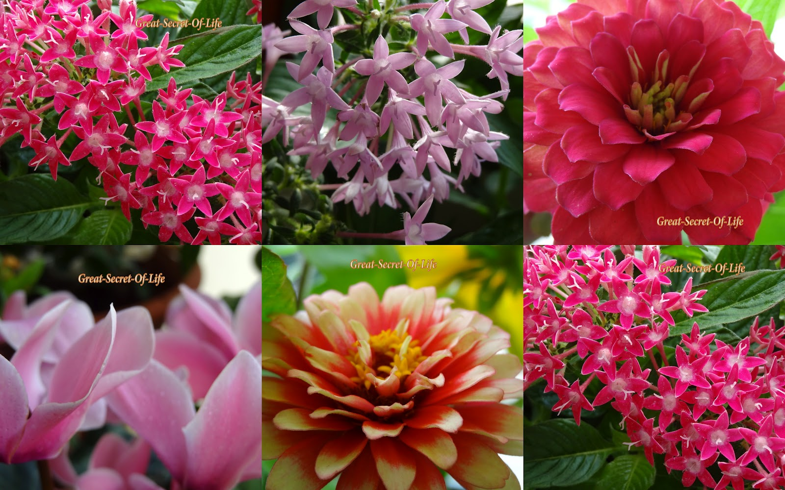 Plants and flowers names for Flowering plants names and pictures