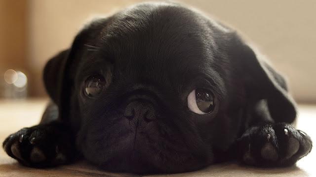 cún con đang buồn đó