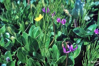 About Tundra