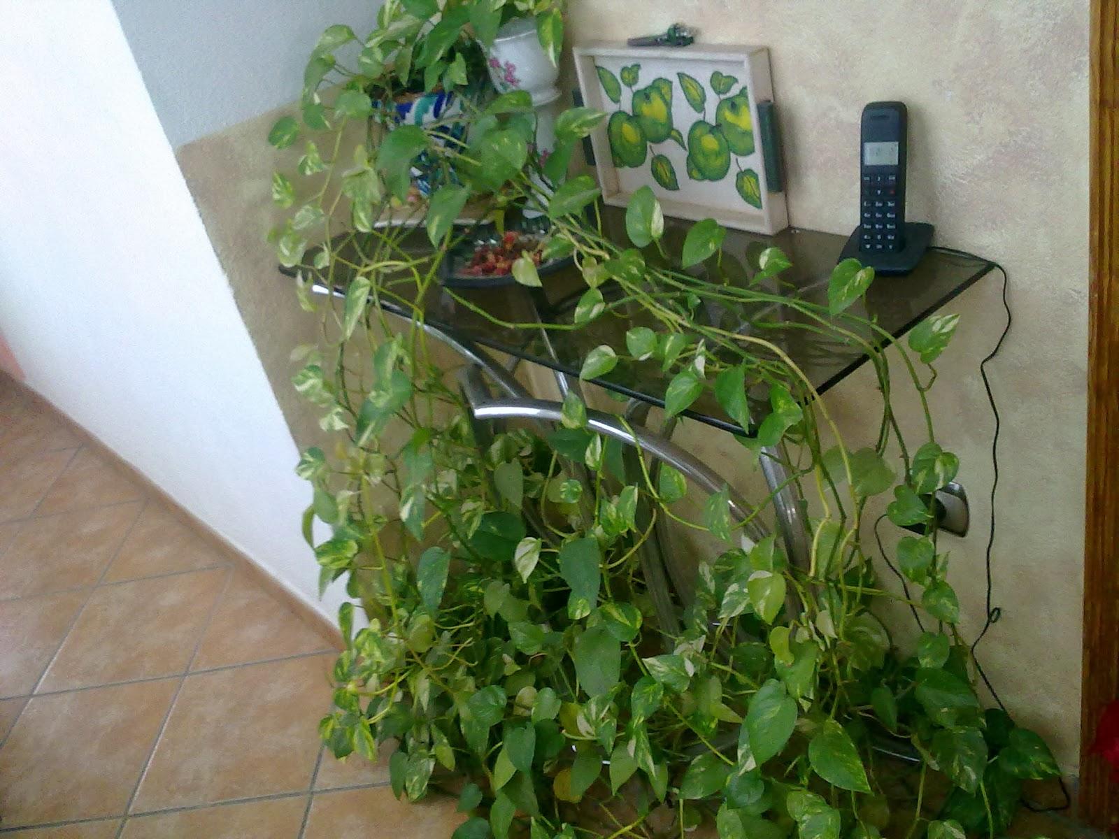 Entre patios y plantas que plantas poner en el interior - Ver plantas de interior ...