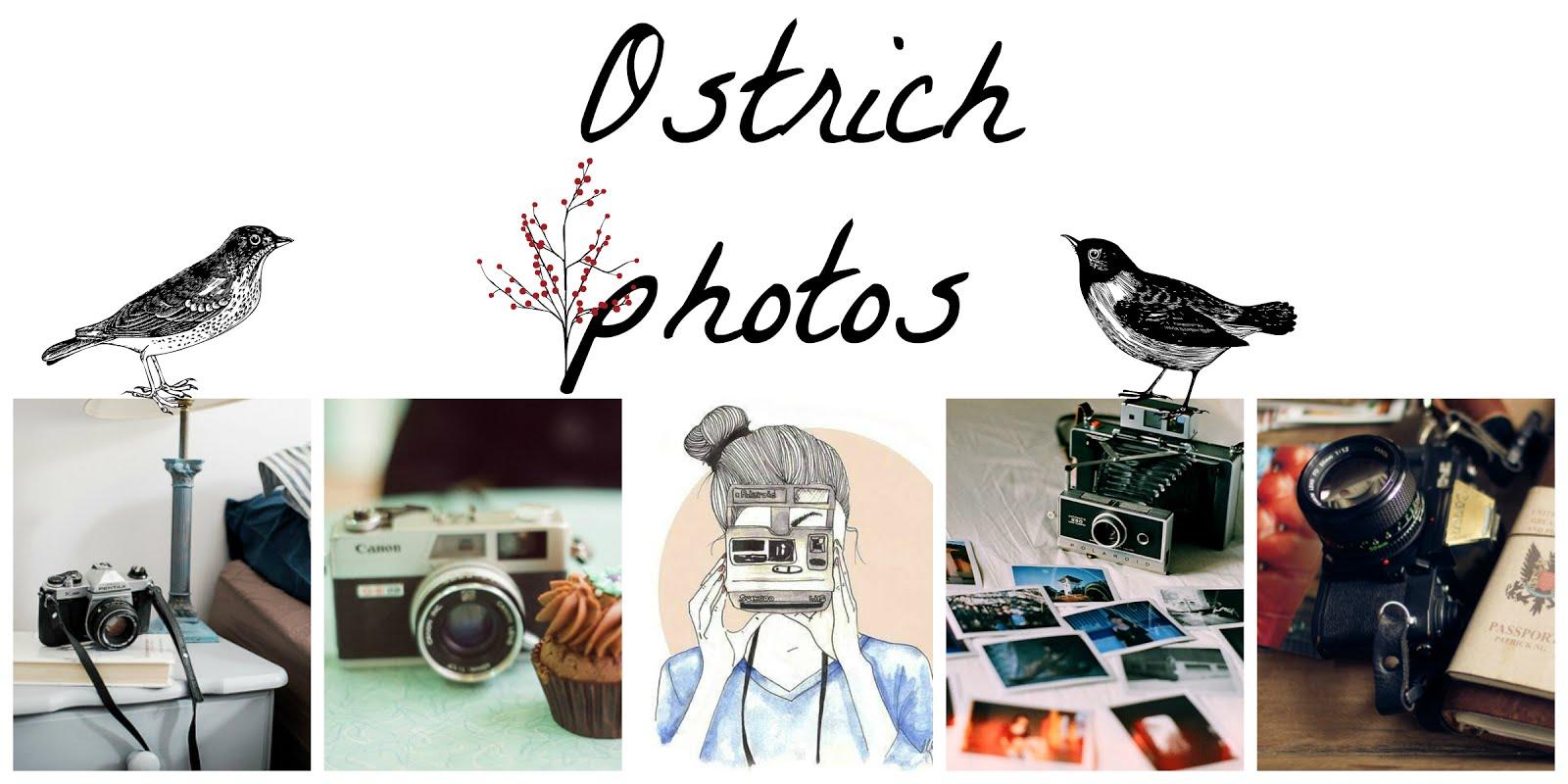 Ostrich photos