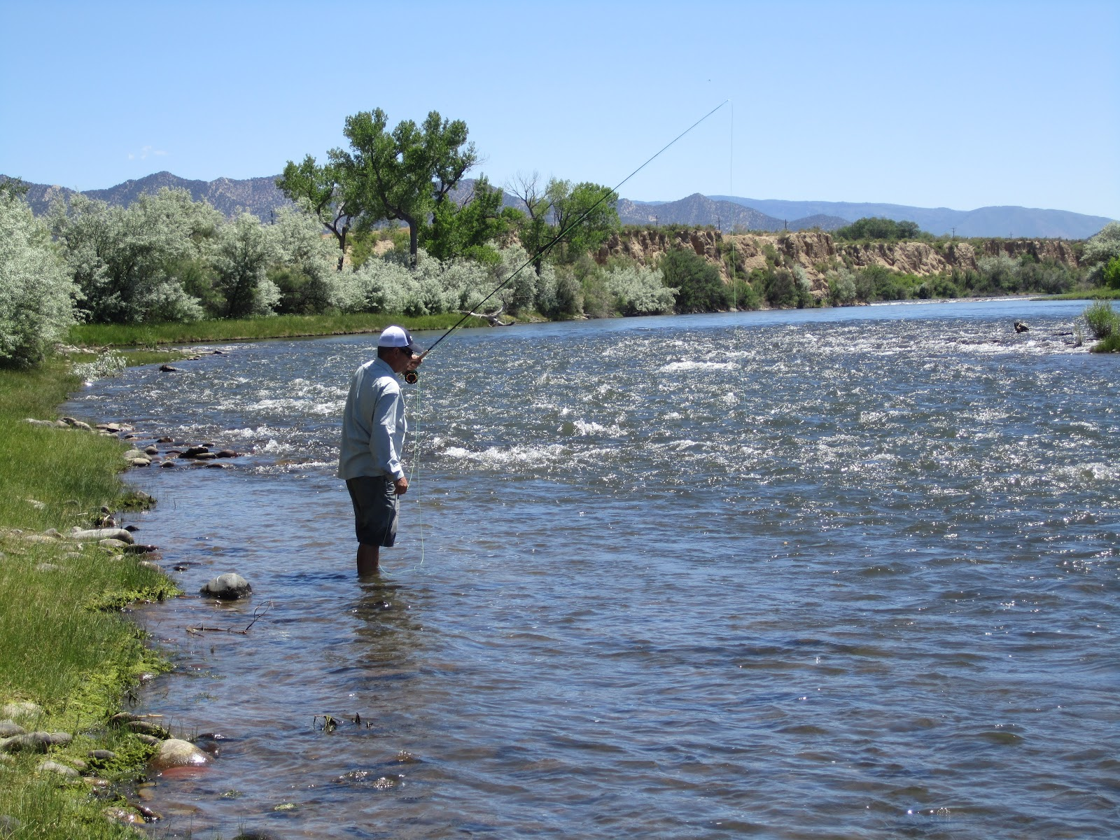 Colorado and roaring fork river fly fishing jay for Roaring river fishing hours