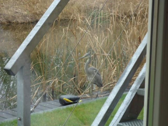 Van alles wat un peu de tout vogel in de tuin oiseau dans le jardin - Loodverf blanc reactie faire ...