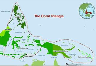 Triángulo de Coral