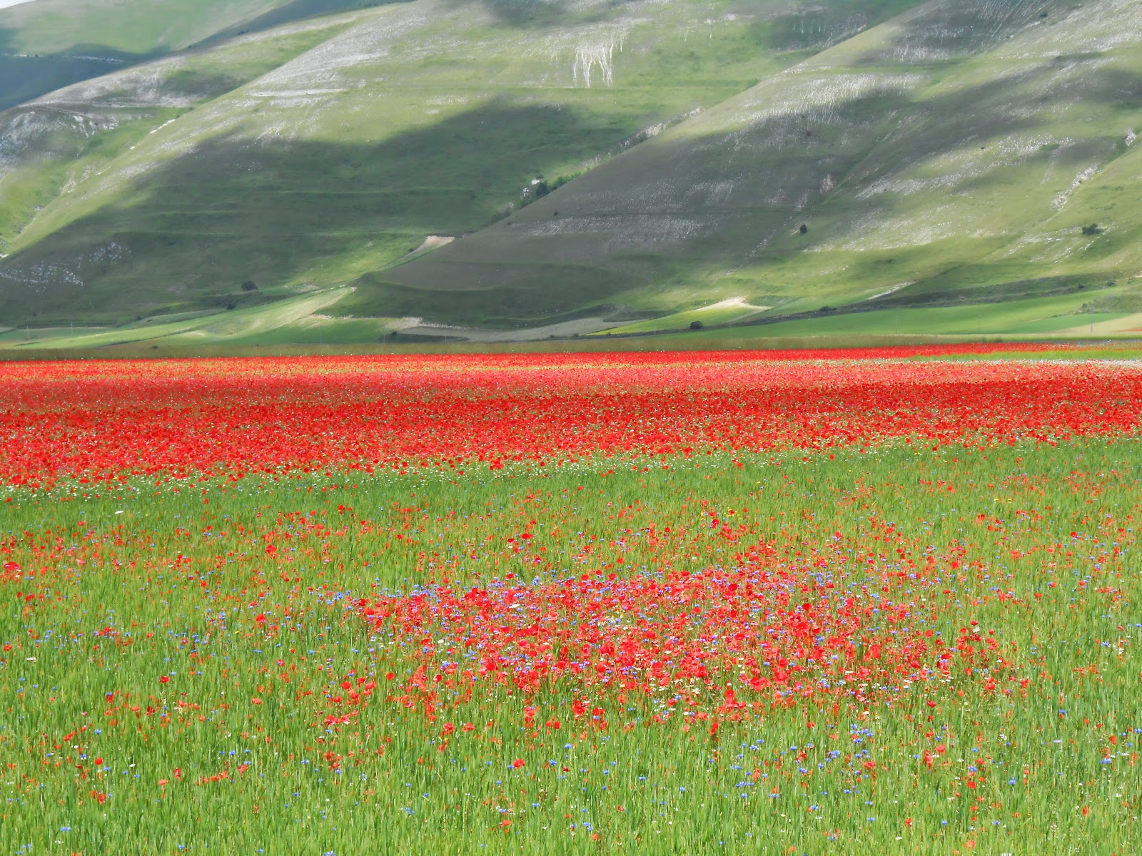 La collina dei mici le fioriture multicolore dei piani di for Piani di campagna in collina