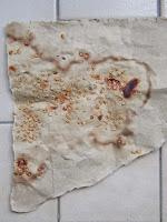 Semente de tomate seca num bocado de papel