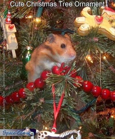 funny cute hamster ornament