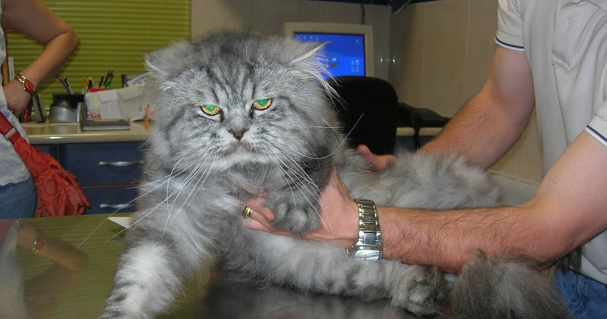 Cl nica veterinaria palomera las u as del gato mi gato lo ara a todo - Clinica veterinaria silla ...