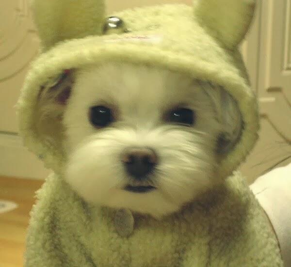 Amazing Creatures: Cute dogs (50 pics)