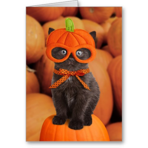 i Smiled You: Pumpkin Kitten | Funny Happy Halloween Card