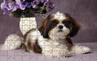 Shih Tzu dog Puzzle