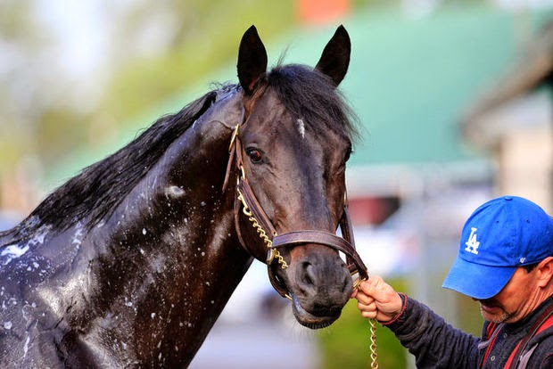 http://www.nj.com/horse-racing/index.ssf/2014/05/kentucky_derby_2014_an_in-depth_look_at_all_20_contenders.html