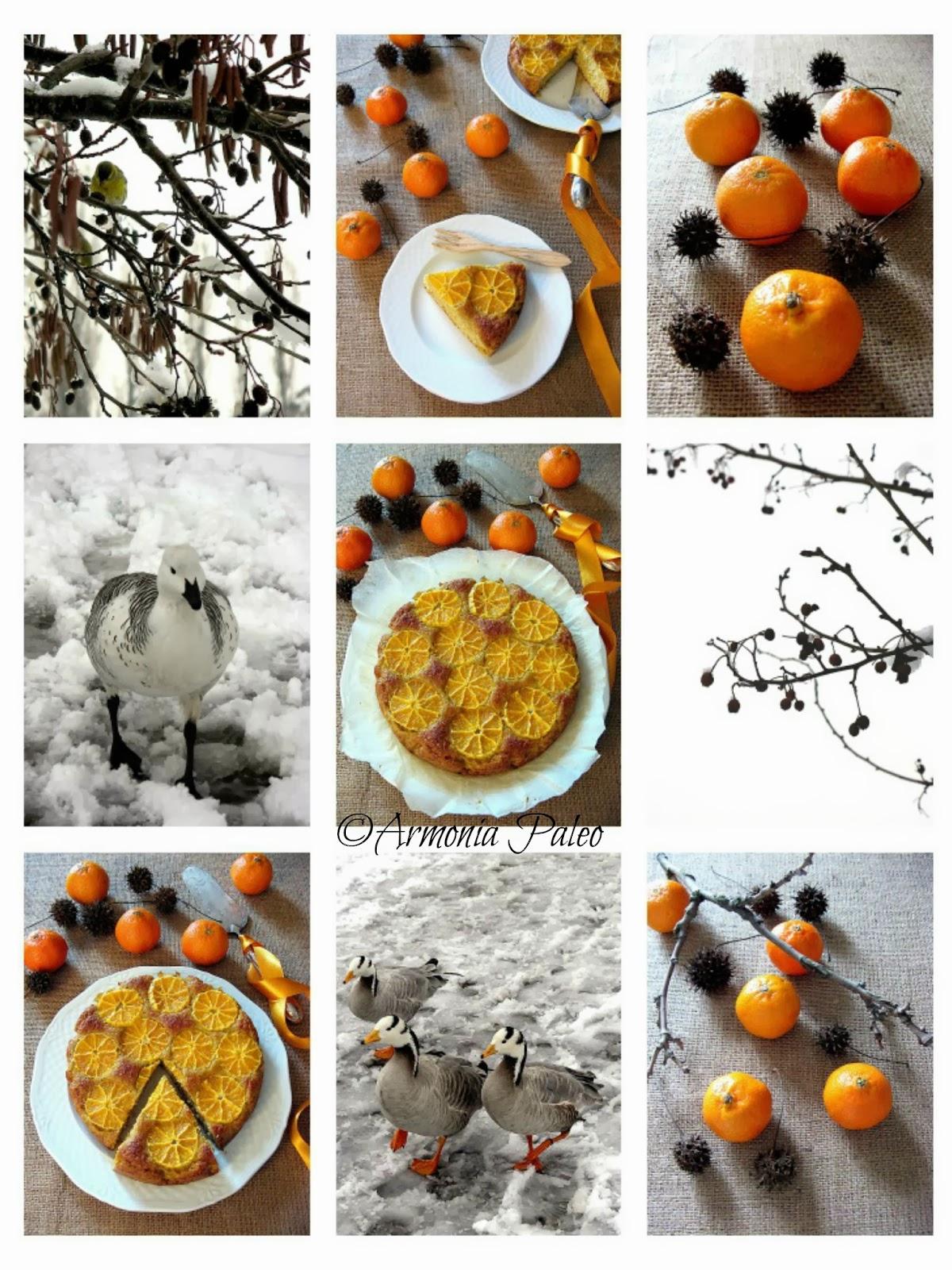 Torta al Cocco e Clementine di Armonia Paleo