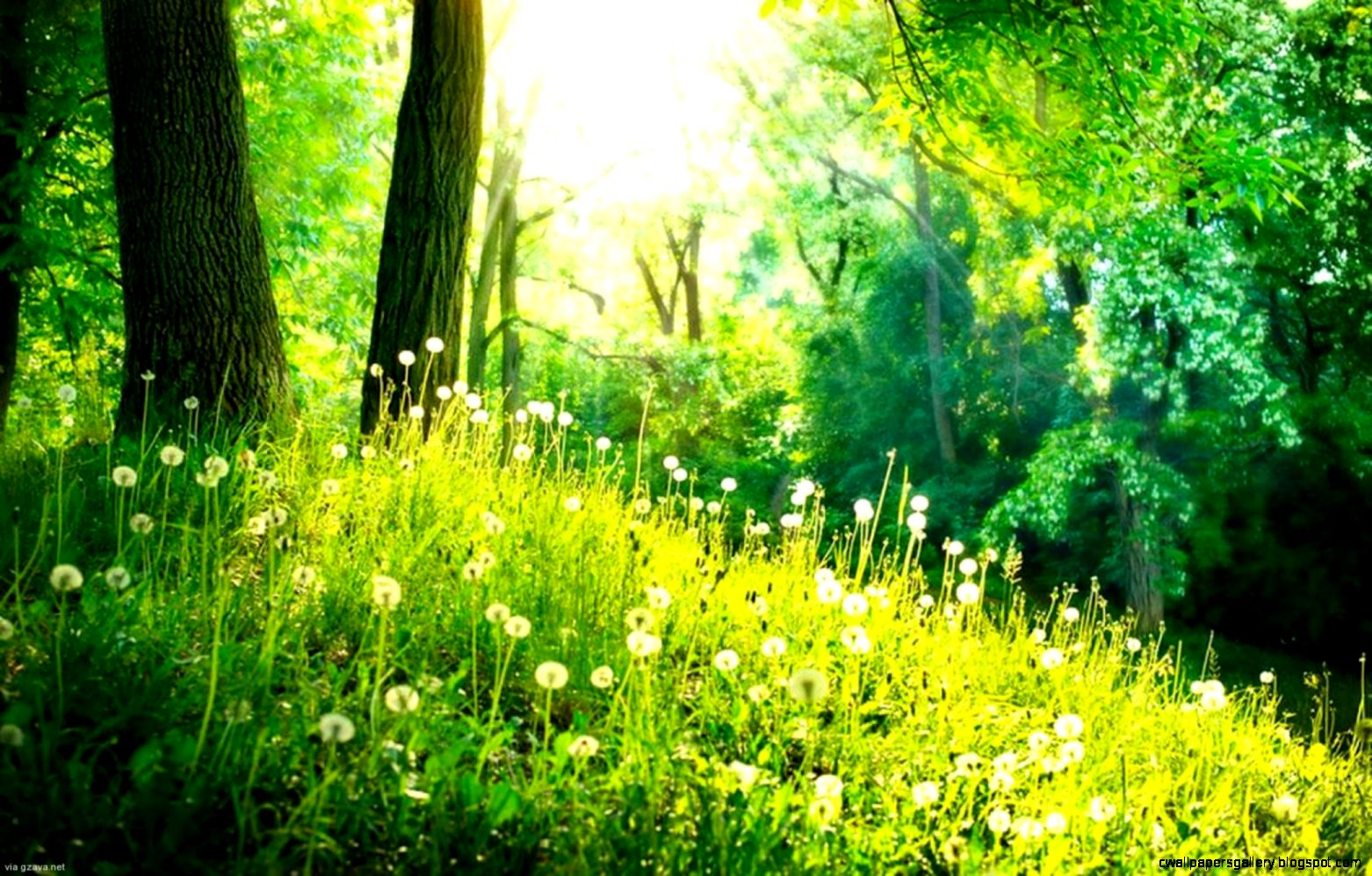Spring Forest Flowers Wallpaper     Reference pictures