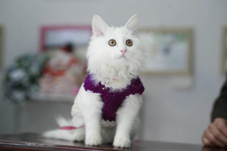 Kết quả hình ảnh cho áo chó mèo
