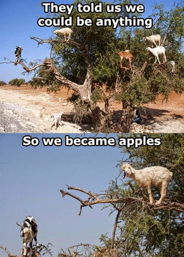 30 Funny animal captions - part 26 (30 pics), funny animal meme, funny meme, animal picture with caption