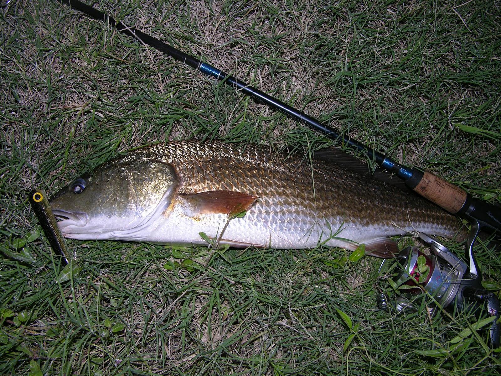 Mosquito lagoon indian river fishing catfish creek loop for Indian river fishing