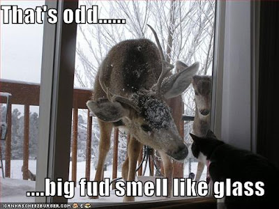 funny deer pictures. Funny Deer Photo