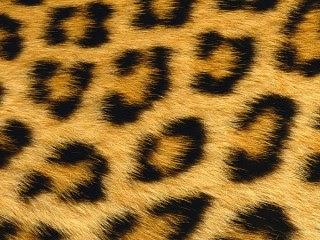 Leopardova koža download besplatne pozadine slike za mobitele