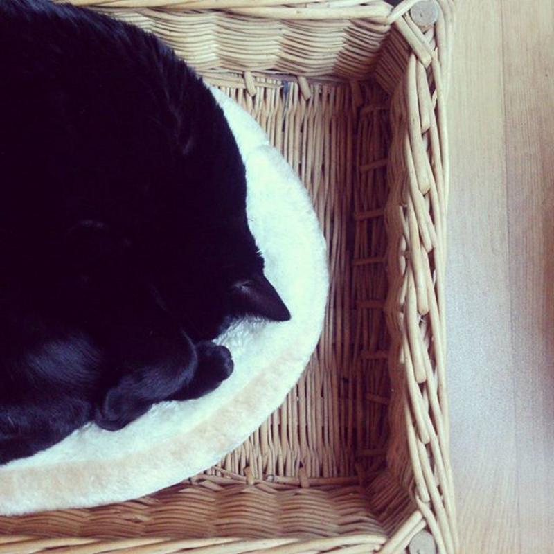 Gucci dors chat noir