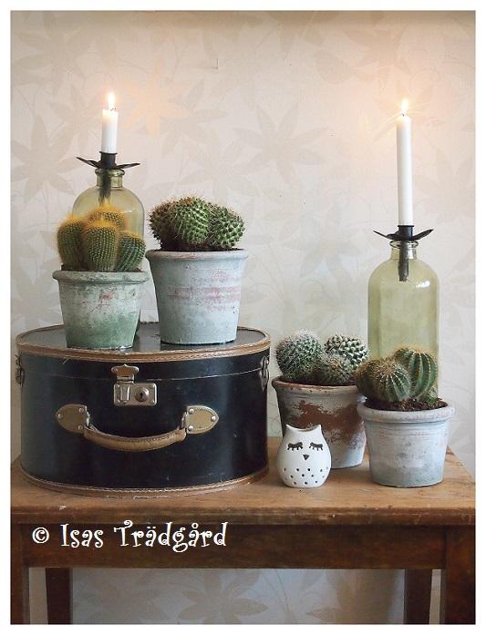 Stilfullt med kaktusar