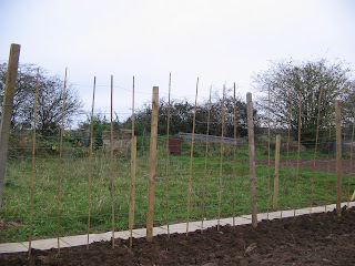 the runner bean fence with added uprights to improve climb of plants.