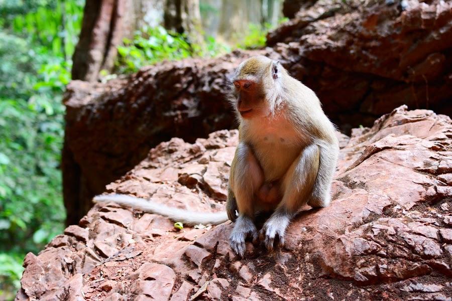 jaskinia małp Monkey Cave Temple, małpy w tajlandii