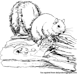 squirrel animal coloring pages coloringsnet