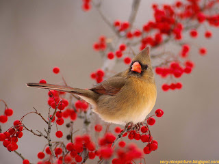 nice wallpapers | birds wallpapers