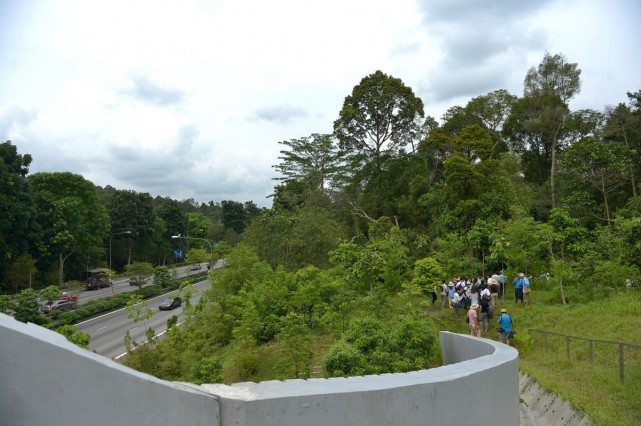 To minimise disturbance, the number of visitors will be limited to 20 a tour and they will use only a small pathway at the side of the bridge.