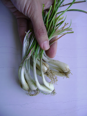 Rakkyo bulbs, Kiangsi scallions